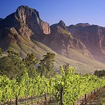 Vineyard in Franschhoek, South Africa by miquitos, on Flickr