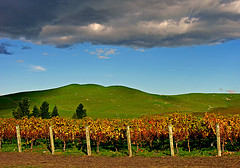 Prospect Vineyard, Hawkes Bay, New Zealand, 10 May 2006 by PhillipC, on Flickr