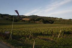 Winnice w Polsce rozwiną enoturystykę