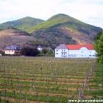 Wino Dolina Wachau