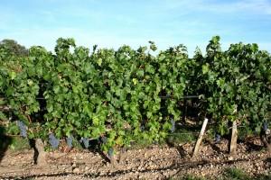 bordeaux-winorosl