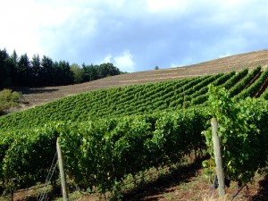 oregon-vineyard